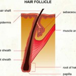 Growth media, baldness and…foreskin?