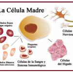 El estrés de Nature con las células madre