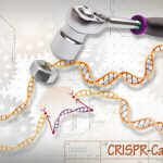 A pinch of salt for CRISPR research