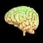 Intelligence: a mishmash of genetic ingredients