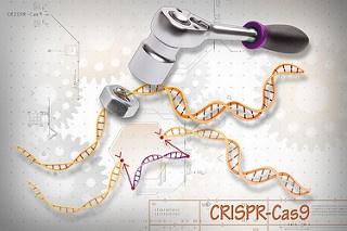 CRISPR 2.0 precisión incrementada